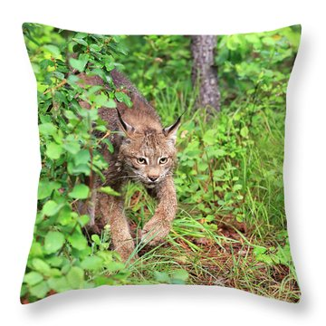Canada Lynx Throw Pillow by Louise Heusinkveld