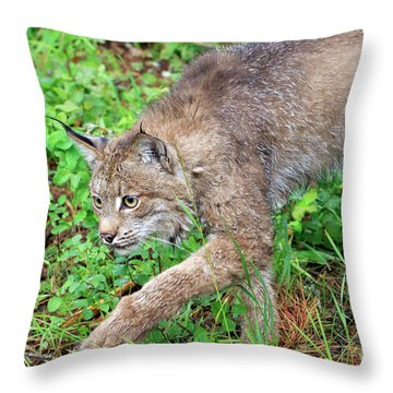 Canada Lynx Lynx Canadensis Throw Pillow by Louise Heusinkveld