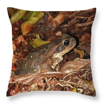 Cane Toad Throw Pillow