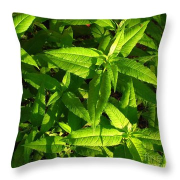 Covering Throw Pillow