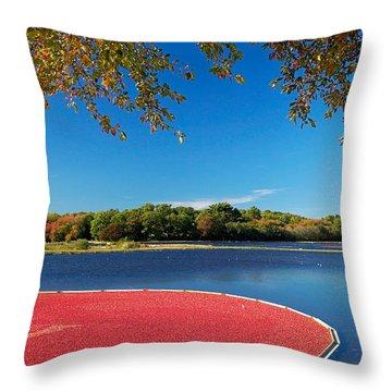 Cape Cod Cranberry Bog Throw Pillow by Matt Suess