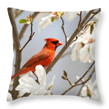 Throw Pillow featuring the photograph Cardinal In Magnolia by Angel Cher