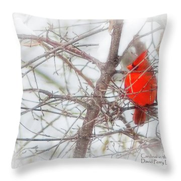 Throw Pillow featuring the photograph Cardinal In The Snow by David Perry Lawrence