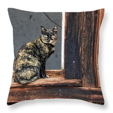 Cat In A Window Throw Pillow