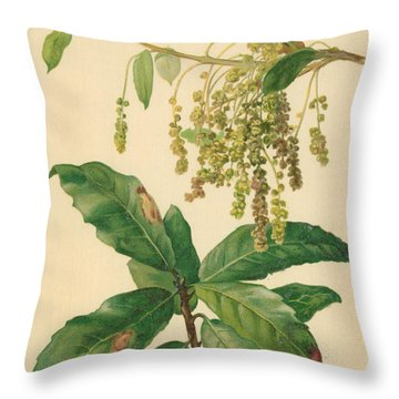Catkins And Leaves Of Holm Oak Throw Pillow