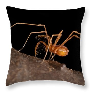 Cave Harvestman Throw Pillow