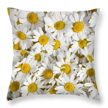 Chamomile Flowers Throw Pillow by Elena Elisseeva