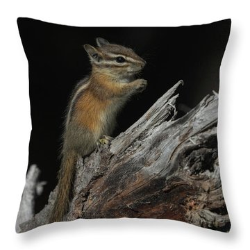 Throw Pillow featuring the photograph Chipmunk by Angie Vogel