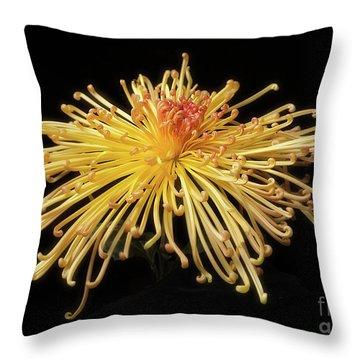Chrysanthemum 'lava' Throw Pillow