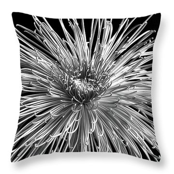 Chrysanthemum 'pink Splendor' Throw Pillow