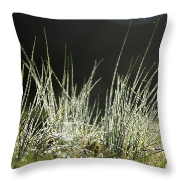 Close-up Of Dew On Grass, In A Sunny, Humid Autumn Morning Throw Pillow