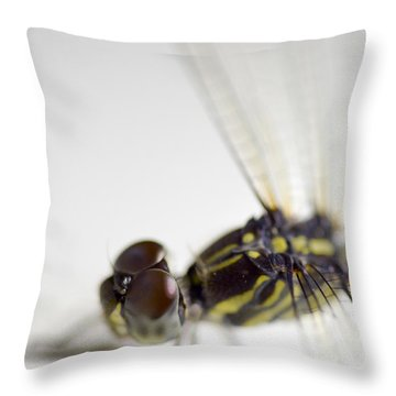Close Up Shoot Of A Anisoptera Dragonfly Throw Pillow