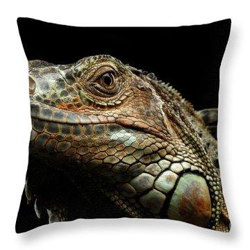 Closeup Green Iguana Isolated On Black Background Throw Pillow by Sergey Taran