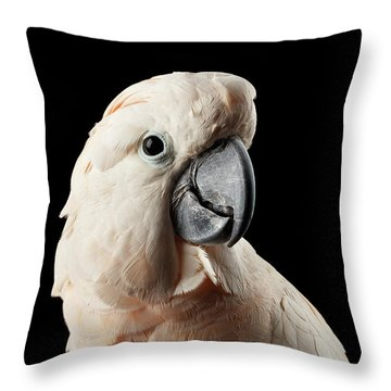 Closeup Head Of Beautiful Moluccan Cockatoo, Pink Salmon-crested Parrot Isolated On Black Background Throw Pillow