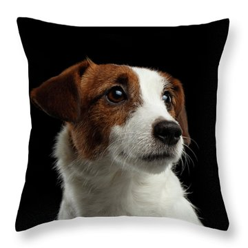 Closeup Portrait Of Jack Russell Terrier Dog On Black Throw Pillow
