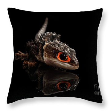Closeup Red-eyed Crocodile Skink, Tribolonotus Gracilis, Isolated On Black Background Throw Pillow by Sergey Taran