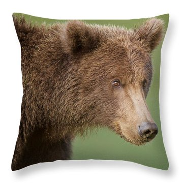 Coastal Brown Bear Throw Pillow