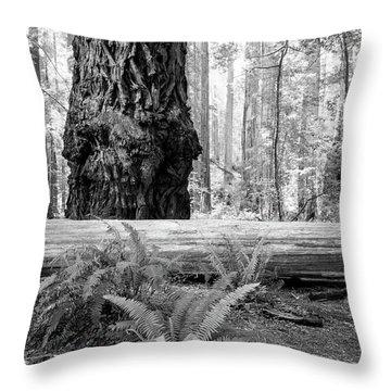 Coastal Redwoods  Throw Pillow