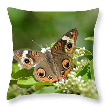 Common Buckeye Throw Pillow