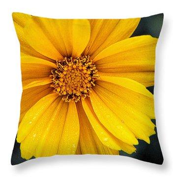 Coreopsis3 Throw Pillow by Susan Crossman Buscho
