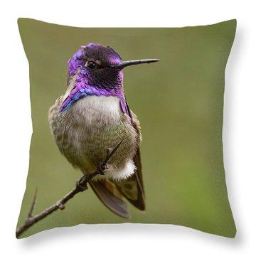 Costa's Hummingbird, Solano County California Throw Pillow by Doug Herr