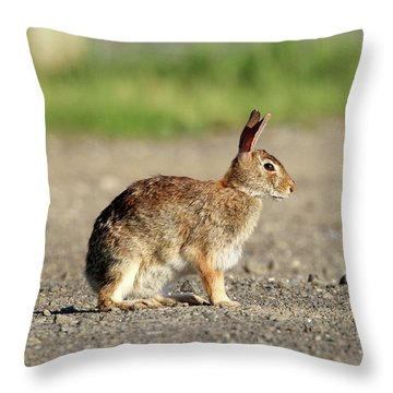 Cottontail Rabbit Stony Brook New York Throw Pillow