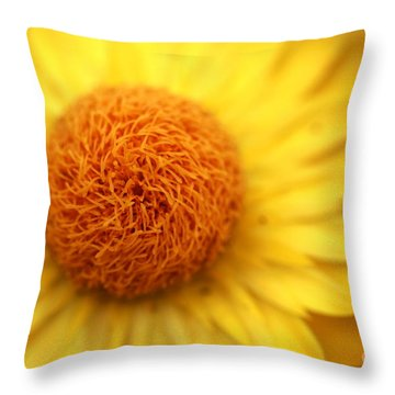 Throw Pillow featuring the photograph Crazy Spin by Stephen Mitchell