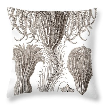 Crinoidea Throw Pillow