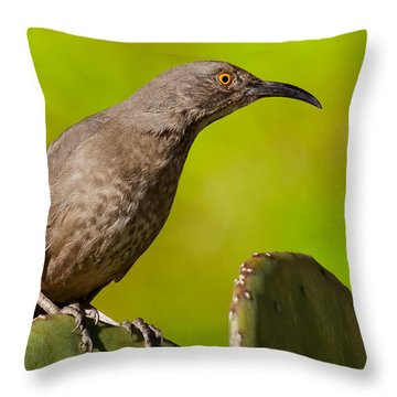 Curve-billed Thrasher On A Prickly Pear Cactus Throw Pillow
