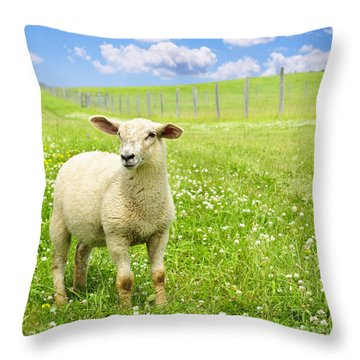 Cute Young Sheep Throw Pillow