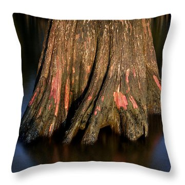 Throw Pillow featuring the photograph Cypress Tree by Evgeny Vasenev