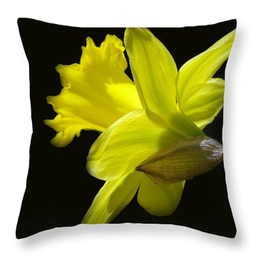 Daffodil On Black Throw Pillow by Mikki Cucuzzo
