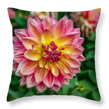 Dahlia 20 Throw Pillow