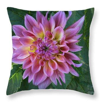 Dahlia 'ac Barney'' Throw Pillow