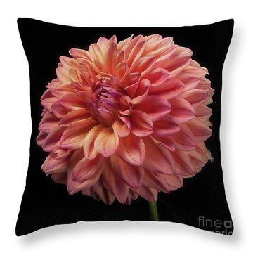 Dahlia 'ferncliff Copper' Throw Pillow