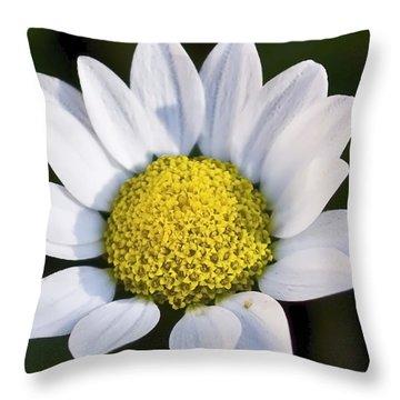 Daisy Throw Pillow by Svetlana Sewell