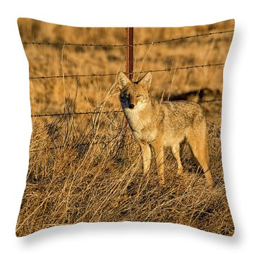 Dawn Raider Throw Pillow