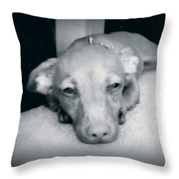 Day Dreaming Doxie Throw Pillow