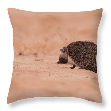 Desert Hedgehog Paraechinus Aethiopicus Throw Pillow