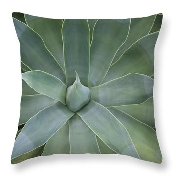 Detail Of An Agave Attenuata Throw Pillow