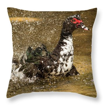 Does She See Me Yet? Wildlife Art By Kaylyn Franks Throw Pillow