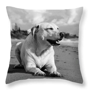 Dog - Monochrome 5  Throw Pillow