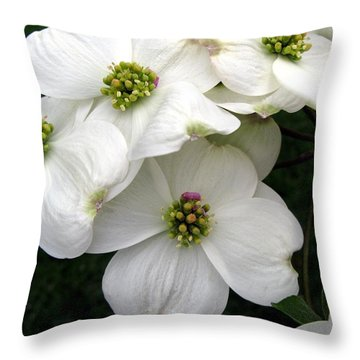 Dogwood Branch Throw Pillow by Carol Sweetwood