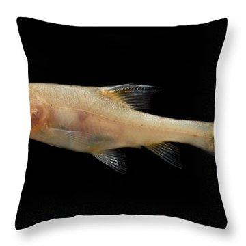 Double Horned Golden Line Barbel Throw Pillow