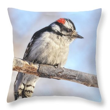 Downy Woodpecker On A Cold Day In Minnesota Throw Pillow