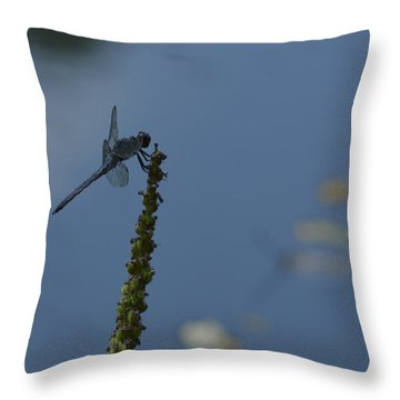 Dragon Fly Throw Pillow by Linda Geiger