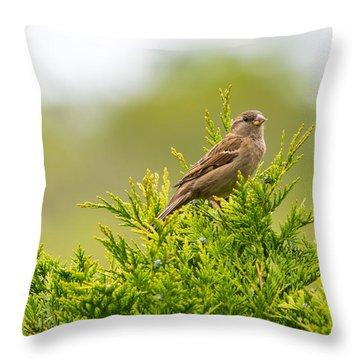 Dunnok Throw Pillow