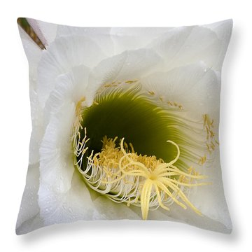 Throw Pillow featuring the photograph Easter Lily Cactus by Phyllis Denton