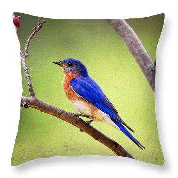Eastern Bluebird Throw Pillow by Al  Mueller