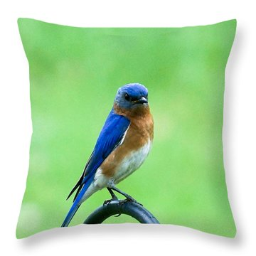 Throw Pillow featuring the photograph Eastern Bluebird by B Wayne Mullins